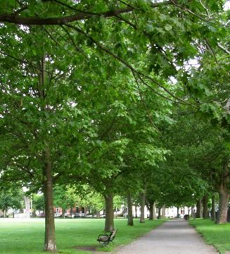 Salem 101: A Walk around Salem Common (3/6)