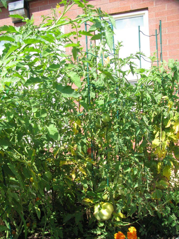 Green in the Middle, A Salem Public Schools Garden Program (5/6)