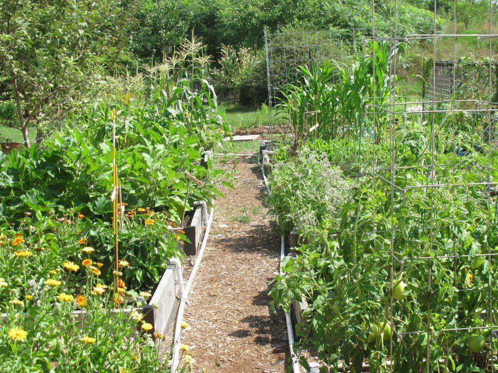 Green in the Middle, A Salem Public Schools Garden Program (3/6)