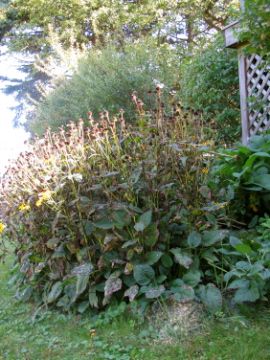 What's Happening in the Garden--September 26 (1/6)