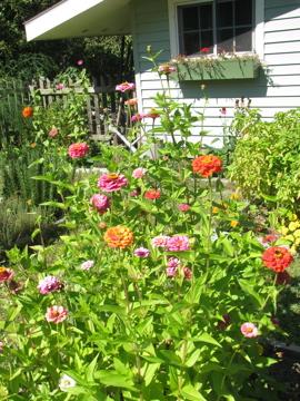 What's Happening in the Garden--September 26 (2/6)