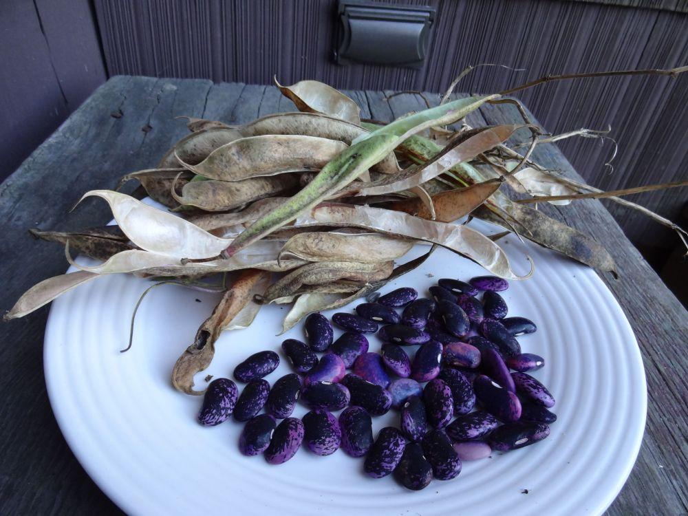 Beans, Beans, Beans (5/6)