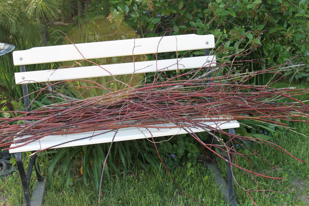 A Mother-Son Red Twigged Dogwood Fence (1/6)
