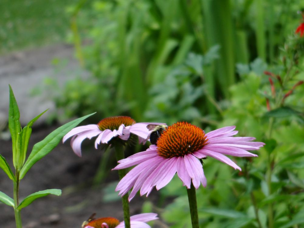 Strolling in Salem Gardens, A Garden Tour! (5/6)