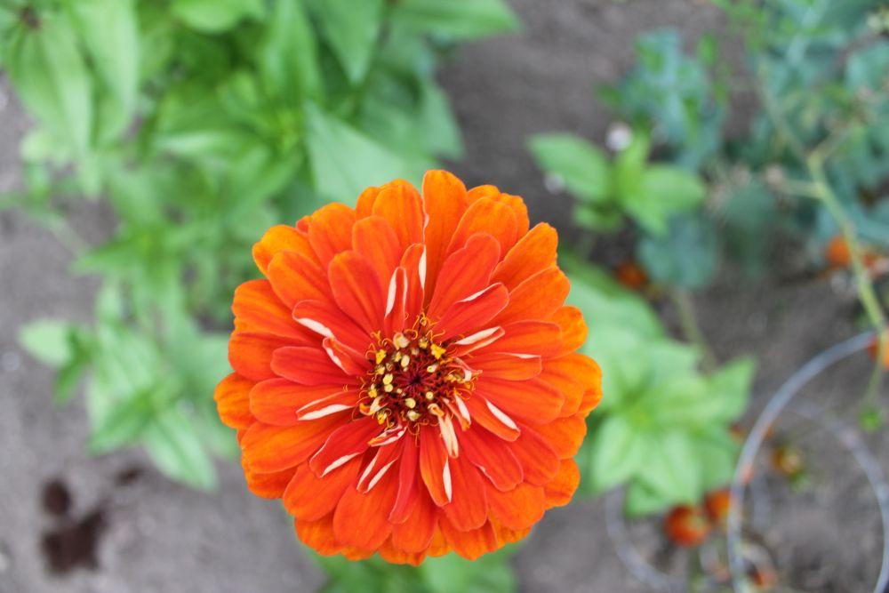 What's Happening In the Garden-- September 10 (6/6)