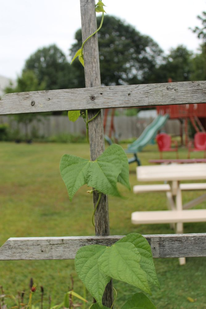 What's Happening In the Garden-- September 10 (4/6)