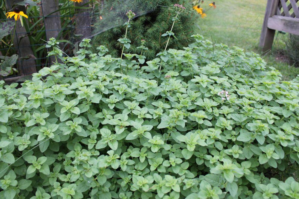 What's Happening In the Garden-- September 10 (2/6)