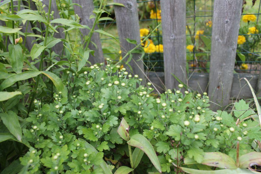 What's Happening In the Garden-- September 10 (1/6)