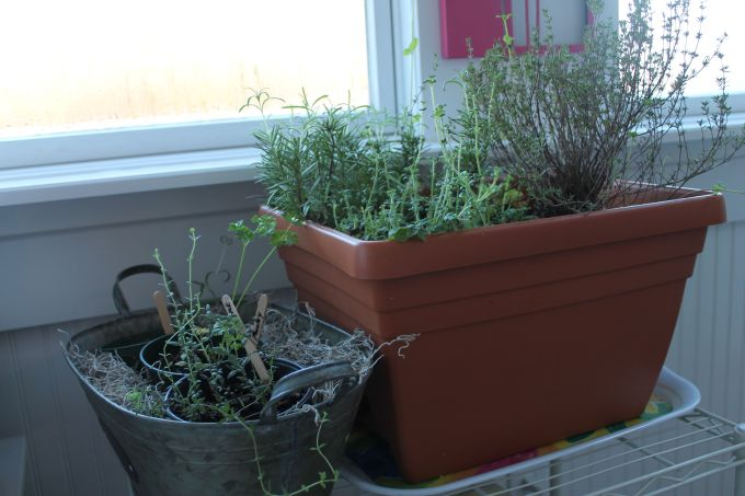 The Littlest Winter Herb Garden