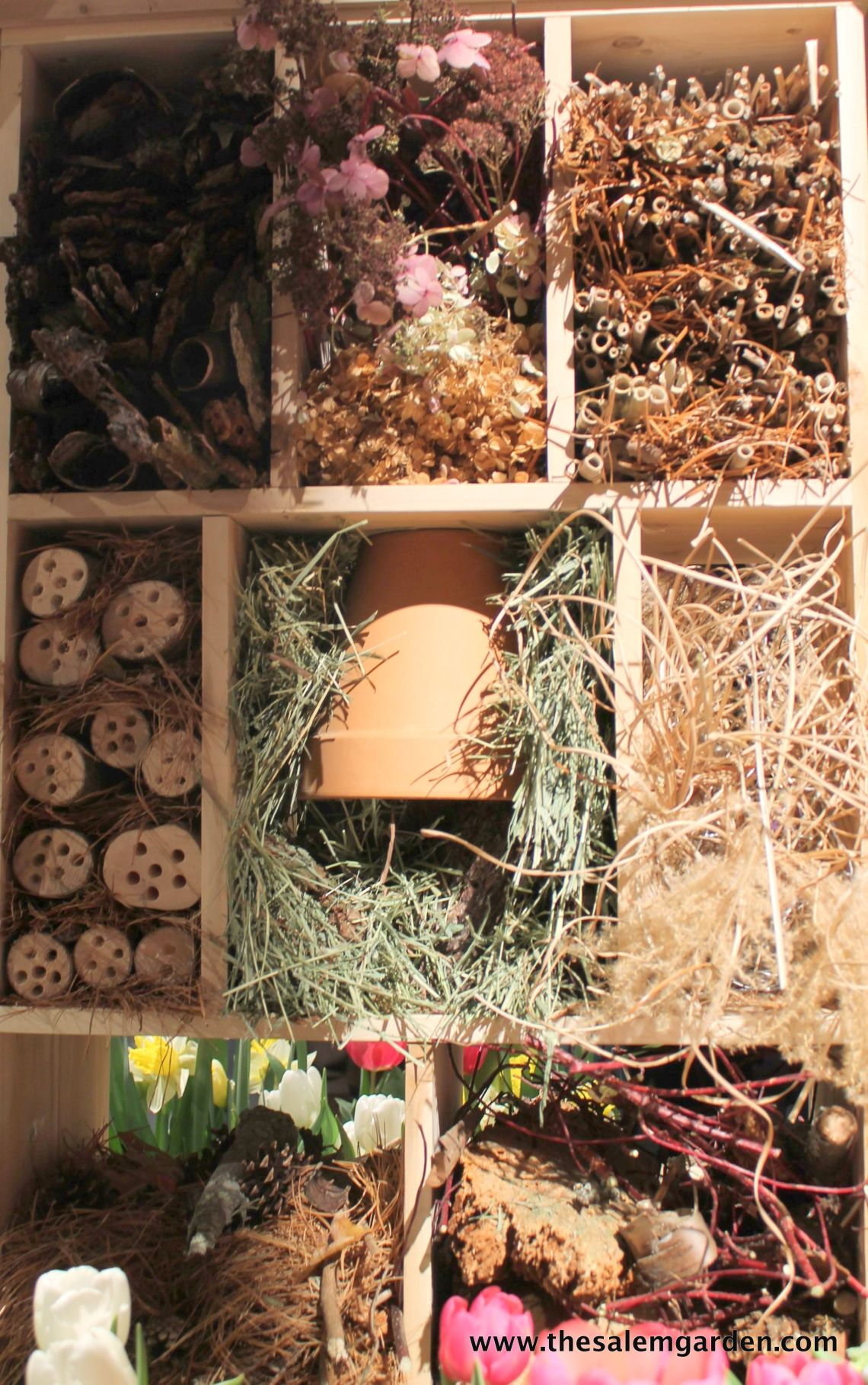 I must have a bug hotel this year!